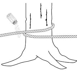my rope gets in contact with salt or tree sap?